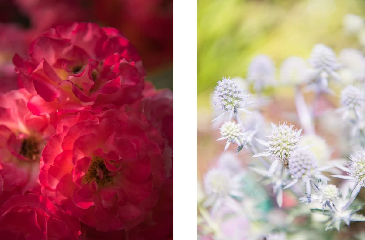 bepflanzung-garten-blüten